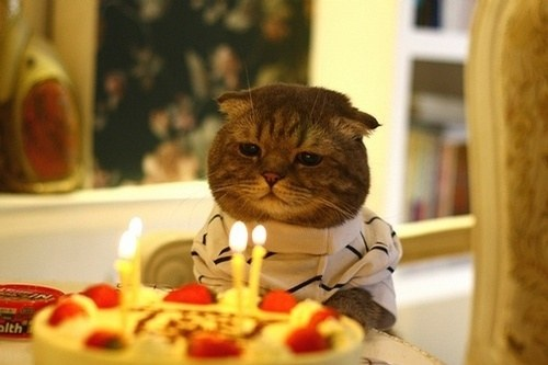 sad-cat-birthday-cake.jpg